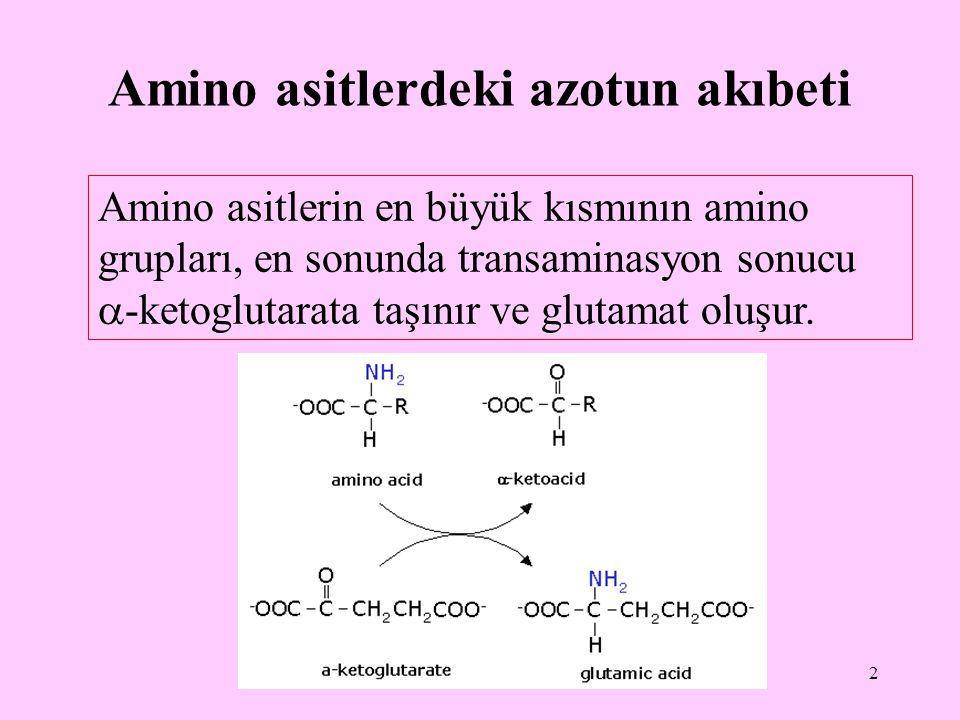 2 Amino asitlerdeki azotun akıbeti Amino asitlerin en büyük kısmının amino grupları, en sonunda transaminasyon sonucu  -ketoglutarata taşınır ve glut