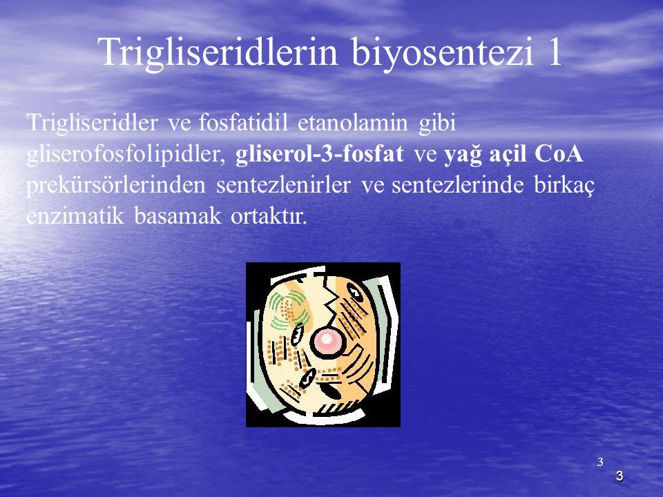 3 3 Trigliseridlerin biyosentezi 1 Trigliseridler ve fosfatidil etanolamin gibi gliserofosfolipidler, gliserol-3-fosfat ve yağ açil CoA prekürsörlerinden sentezlenirler ve sentezlerinde birkaç enzimatik basamak ortaktır.