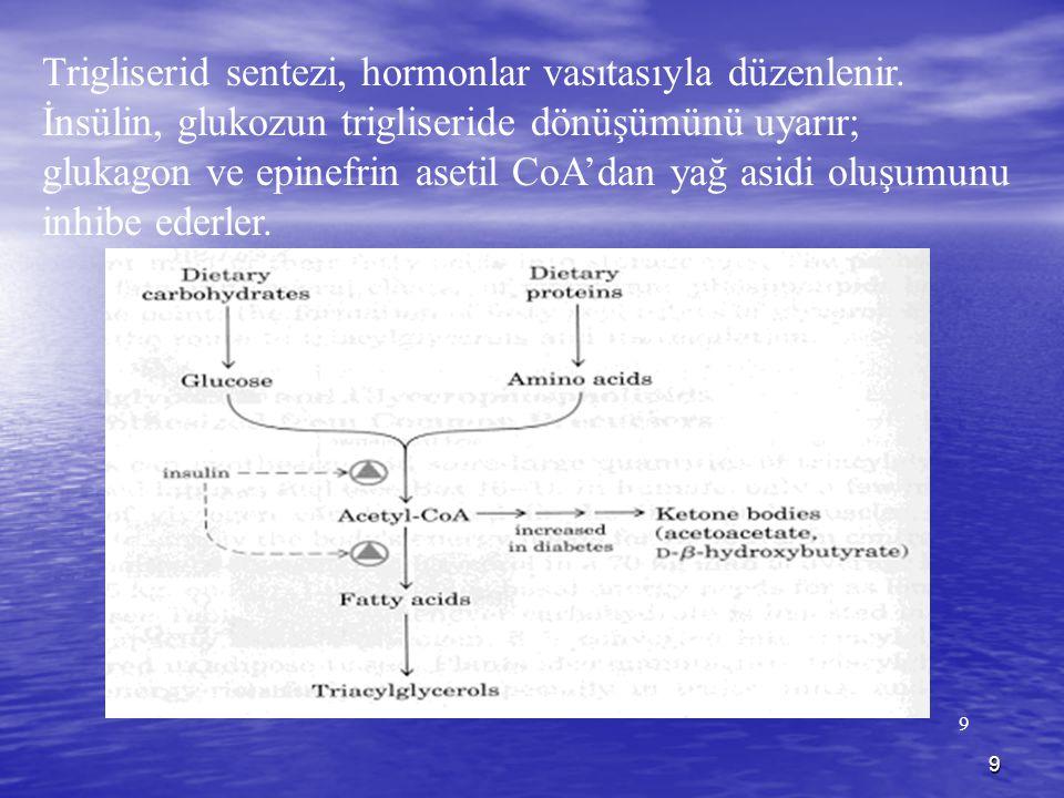 9 9 Trigliserid sentezi, hormonlar vasıtasıyla düzenlenir. İnsülin, glukozun trigliseride dönüşümünü uyarır; glukagon ve epinefrin asetil CoA'dan yağ
