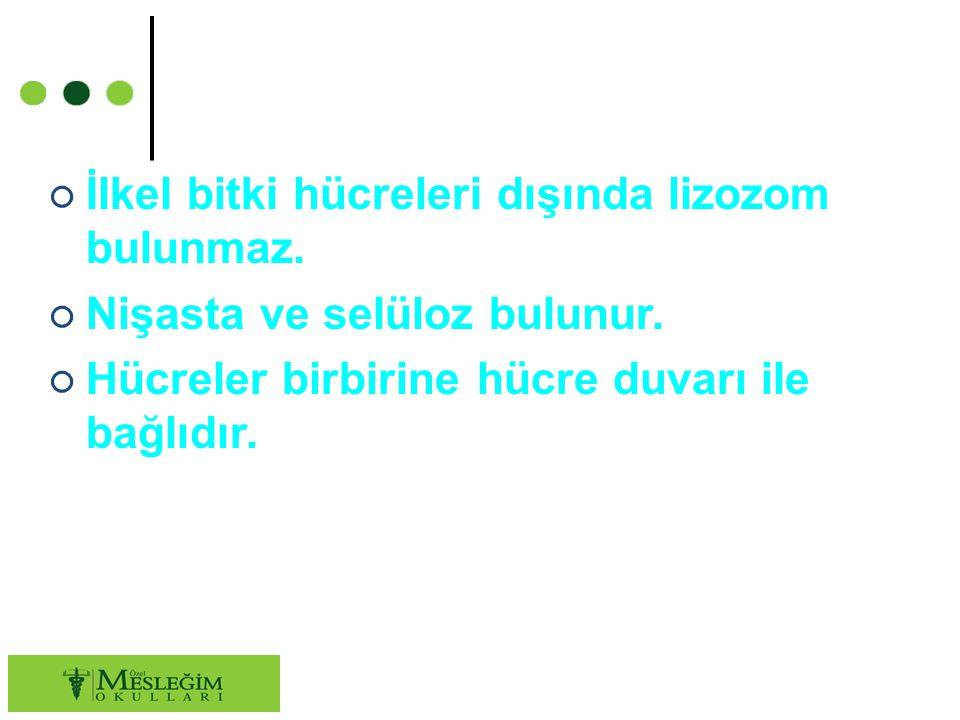 ○ İlkel bitki hücreleri dışında lizozom bulunmaz.○ Nişasta ve selüloz bulunur.