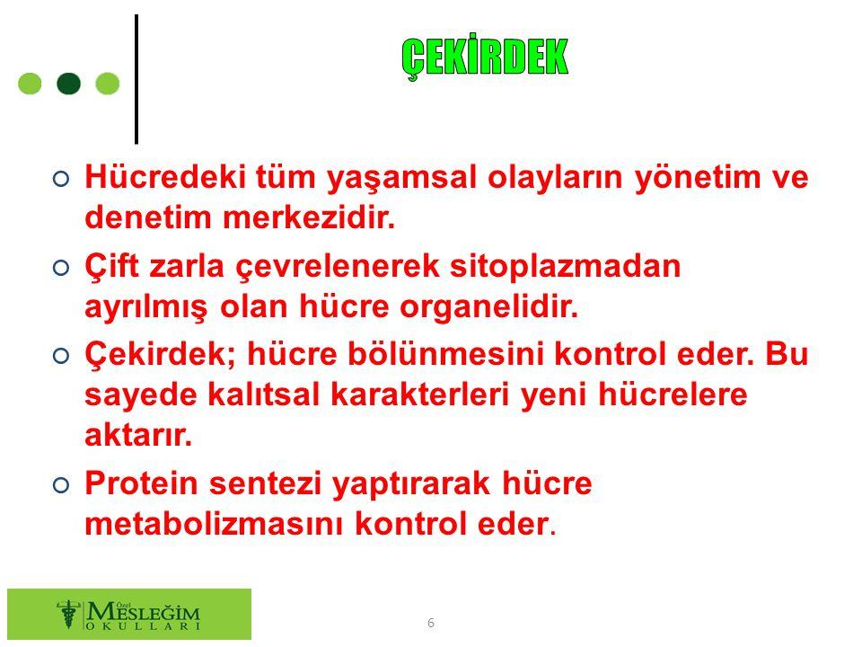 ○ Hücredeki tüm yaşamsal olayların yönetim ve denetim merkezidir.