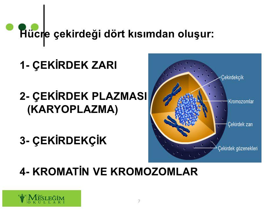 Hücre çekirdeği dört kısımdan oluşur: 1- ÇEKİRDEK ZARI 2- ÇEKİRDEK PLAZMASI (KARYOPLAZMA) 3- ÇEKİRDEKÇİK 4- KROMATİN VE KROMOZOMLAR 7