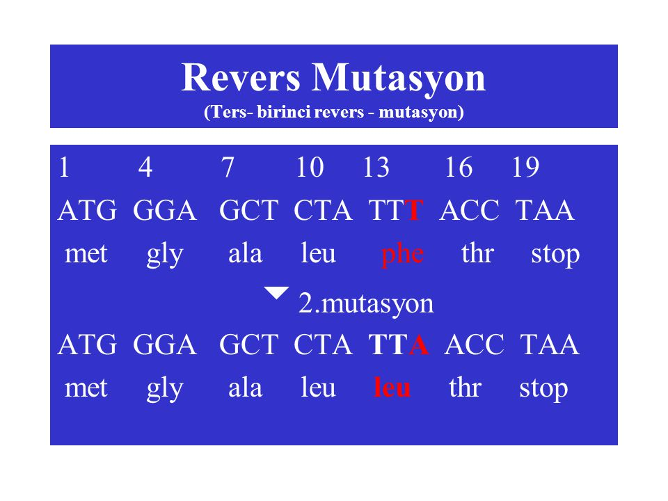 Revers Mutasyon (Ters- birinci revers - mutasyon) 1 4 7 10 13 16 19 ATG GGA GCT CTA TTT ACC TAA met gly ala leu phe thr stop  2.mutasyon ATG GGA GCT