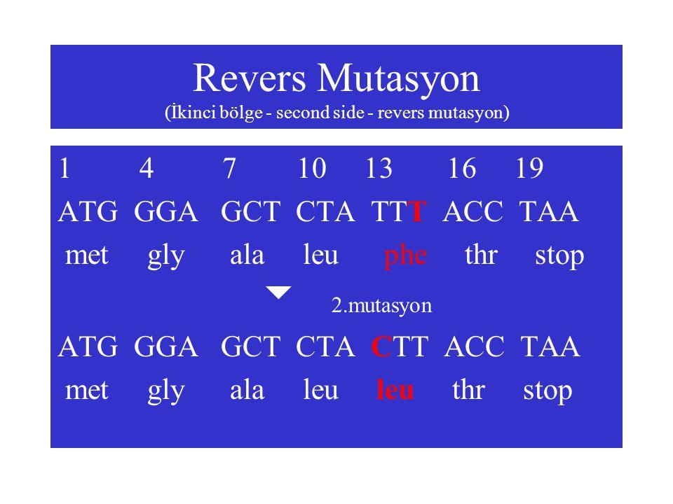 Revers Mutasyon (İkinci bölge - second side - revers mutasyon) 1 4 7 10 13 16 19 ATG GGA GCT CTA TTT ACC TAA met gly ala leu phe thr stop  2.mutasyon
