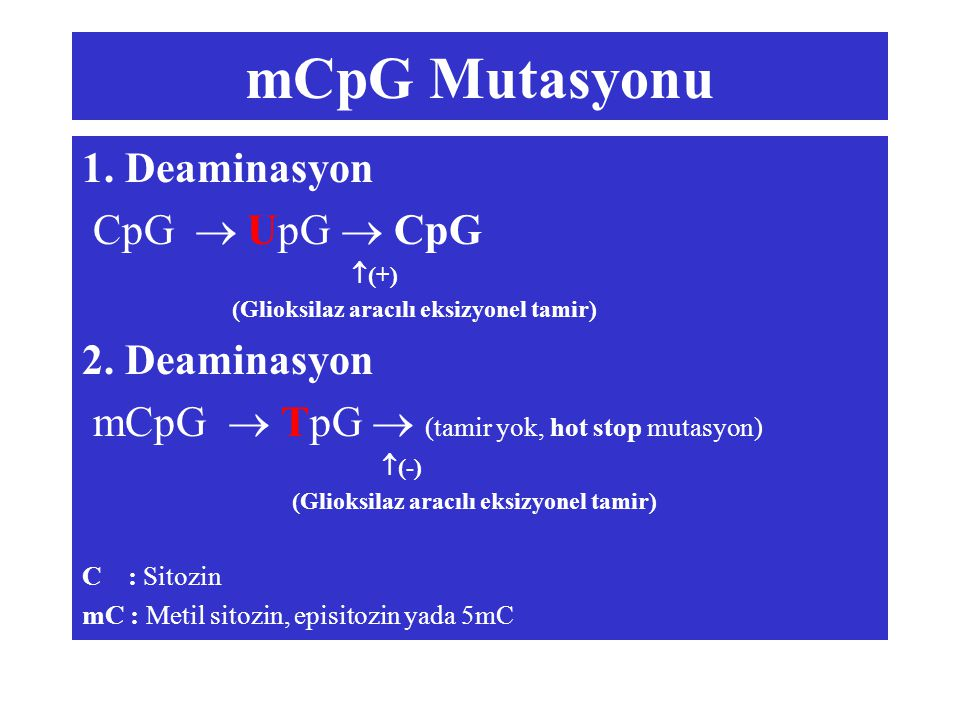 mCpG Mutasyonu 1. Deaminasyon CpG  UpG  CpG  (+) (Glioksilaz aracılı eksizyonel tamir) 2. Deaminasyon mCpG  TpG  (tamir yok, hot stop mutasyon) 