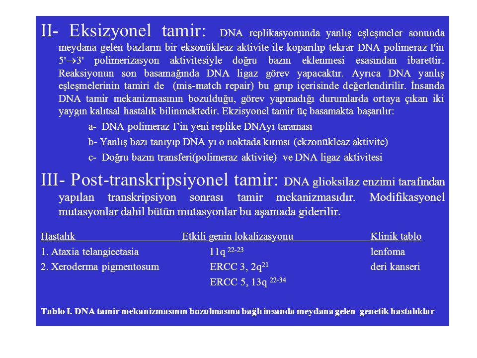 II- Eksizyonel tamir: DNA replikasyonunda yanlış eşleşmeler sonunda meydana gelen bazların bir eksonükleaz aktivite ile koparılıp tekrar DNA polimeraz