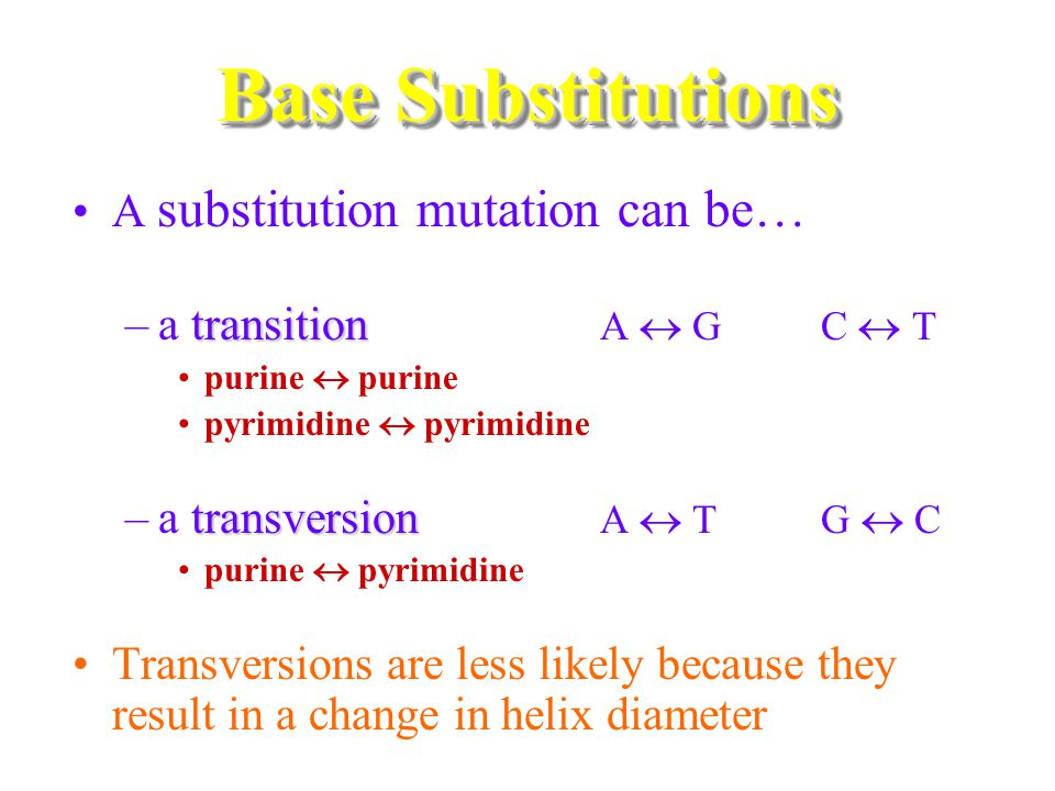 A substitution mutation can be… transition –a transition A  G C  T purine  purine pyrimidine  pyrimidine transversion –a transversion A  T G  C purine  pyrimidine Transversions are less likely because they result in a change in helix diameter Base Substitutions