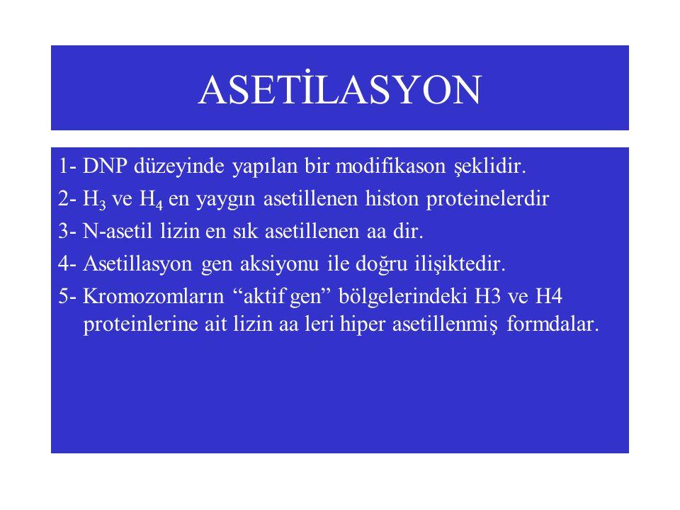 ASETİLASYON 1- DNP düzeyinde yapılan bir modifikason şeklidir. 2- H 3 ve H 4 en yaygın asetillenen histon proteinelerdir 3- N-asetil lizin en sık aset