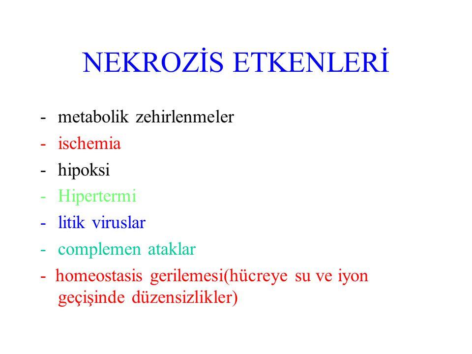NEKROZİS ETKENLERİ -metabolik zehirlenmeler -ischemia -hipoksi -Hipertermi -litik viruslar -complemen ataklar - homeostasis gerilemesi(hücreye su ve i