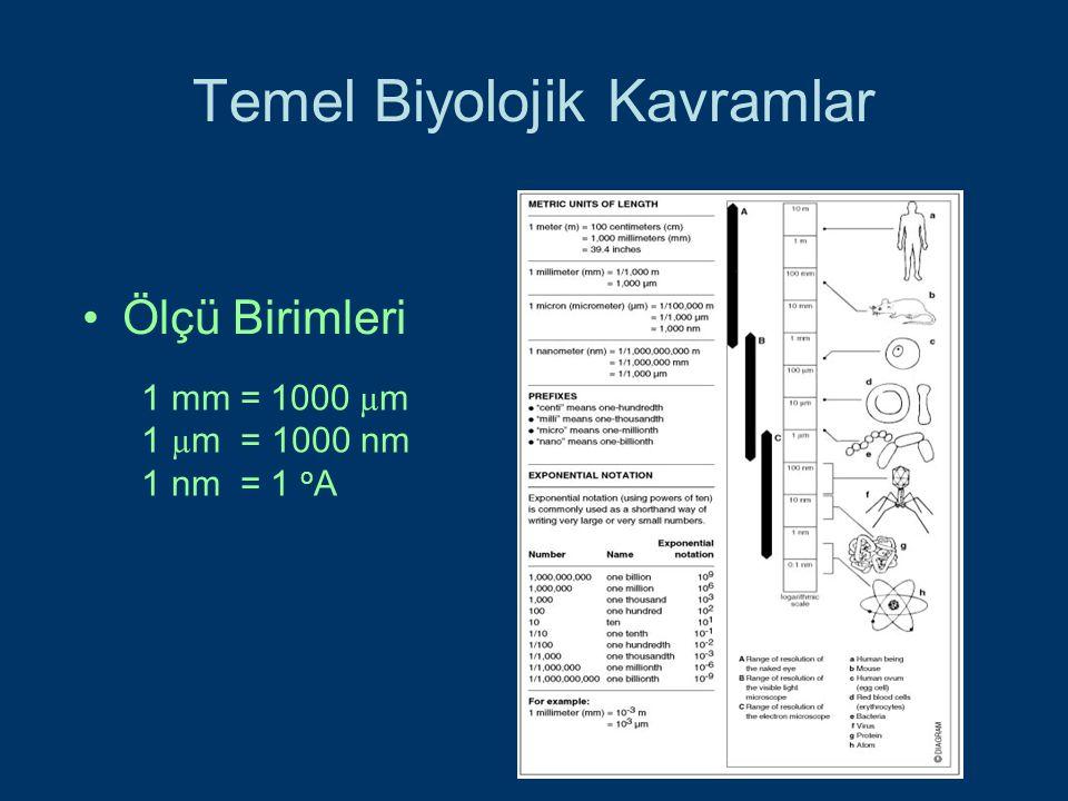 Temel Biyolojik Kavramlar Ölçü Birimleri 1 mm = 1000 µ m 1 µ m = 1000 nm 1 nm = 1 o A