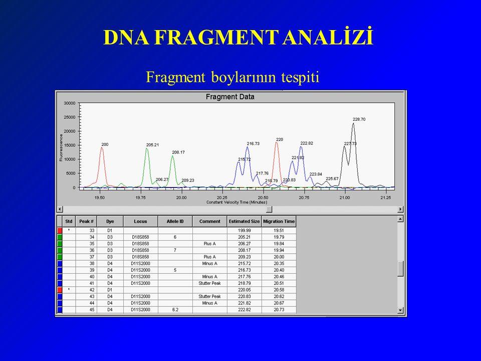 DNA FRAGMENT ANALİZİ Fragment boylarının tespiti