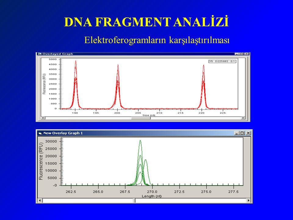 DNA FRAGMENT ANALİZİ Elektroferogramların karşılaştırılması