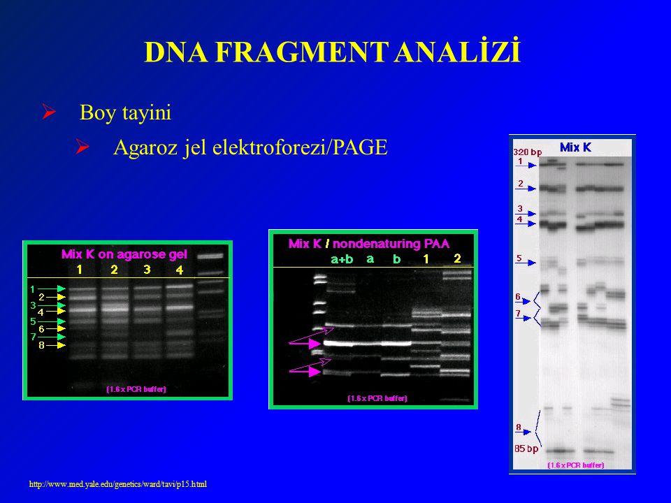 DNA FRAGMENT ANALİZİ  Boy tayini  Agaroz jel elektroforezi/PAGE http://www.med.yale.edu/genetics/ward/tavi/p15.html