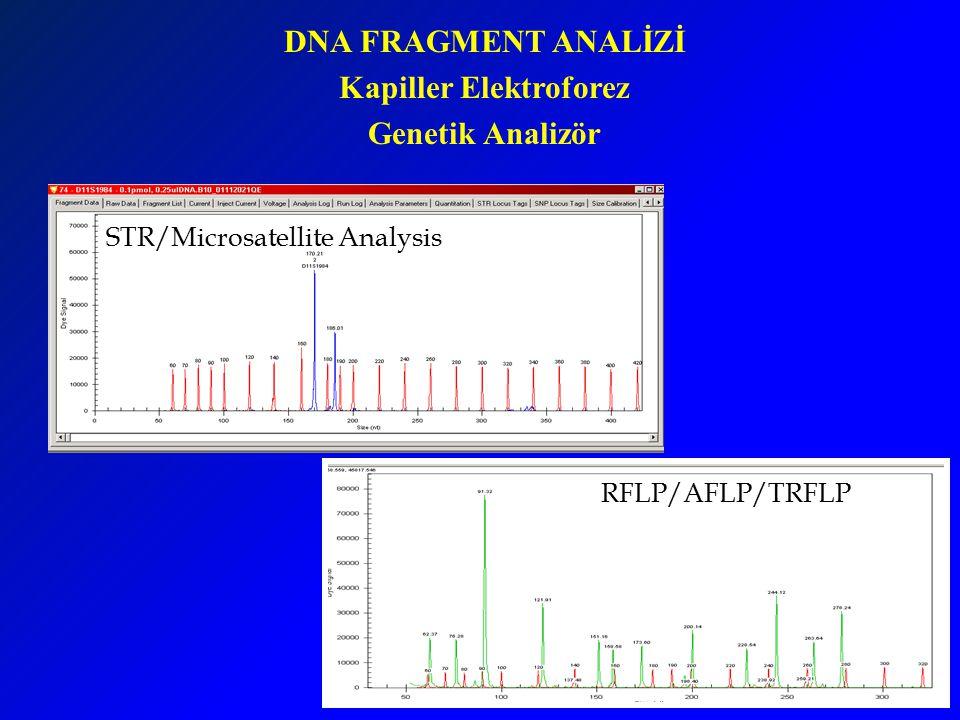 DNA FRAGMENT ANALİZİ Kapiller Elektroforez Genetik Analizör STR/Microsatellite Analysis RFLP/AFLP/TRFLP