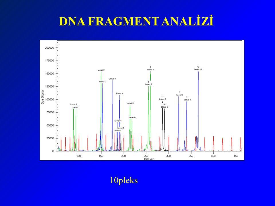 DNA FRAGMENT ANALİZİ 10pleks