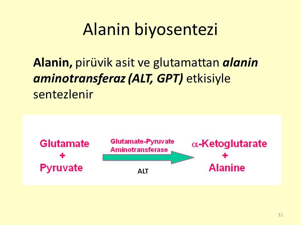 11 Alanin biyosentezi Alanin, pirüvik asit ve glutamattan alanin aminotransferaz (ALT, GPT) etkisiyle sentezlenir ALT