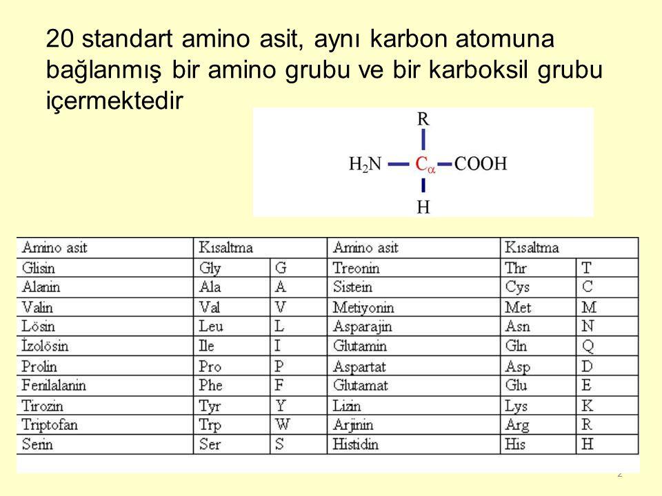 2 20 standart amino asit, aynı karbon atomuna bağlanmış bir amino grubu ve bir karboksil grubu içermektedir