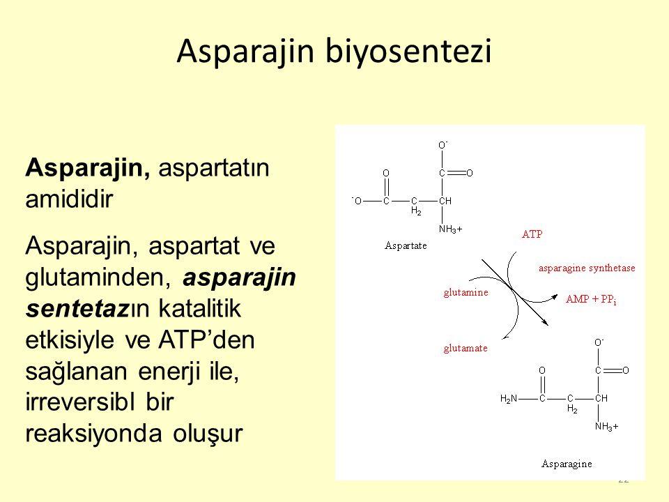 22 Asparajin biyosentezi Asparajin, aspartatın amididir Asparajin, aspartat ve glutaminden, asparajin sentetazın katalitik etkisiyle ve ATP'den sağlan