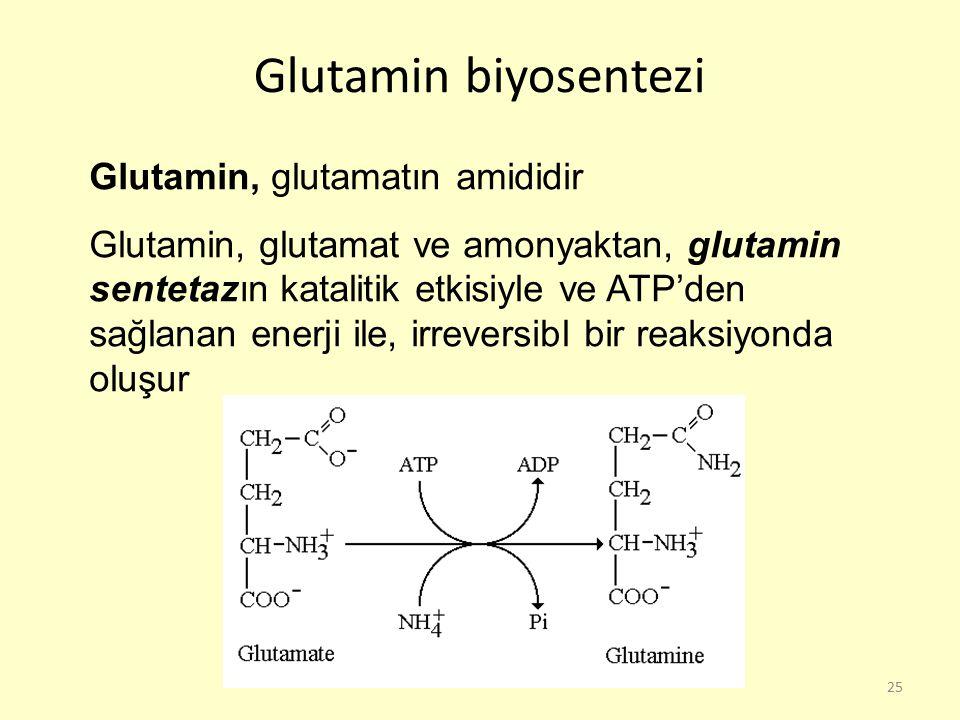 25 Glutamin biyosentezi Glutamin, glutamatın amididir Glutamin, glutamat ve amonyaktan, glutamin sentetazın katalitik etkisiyle ve ATP'den sağlanan en