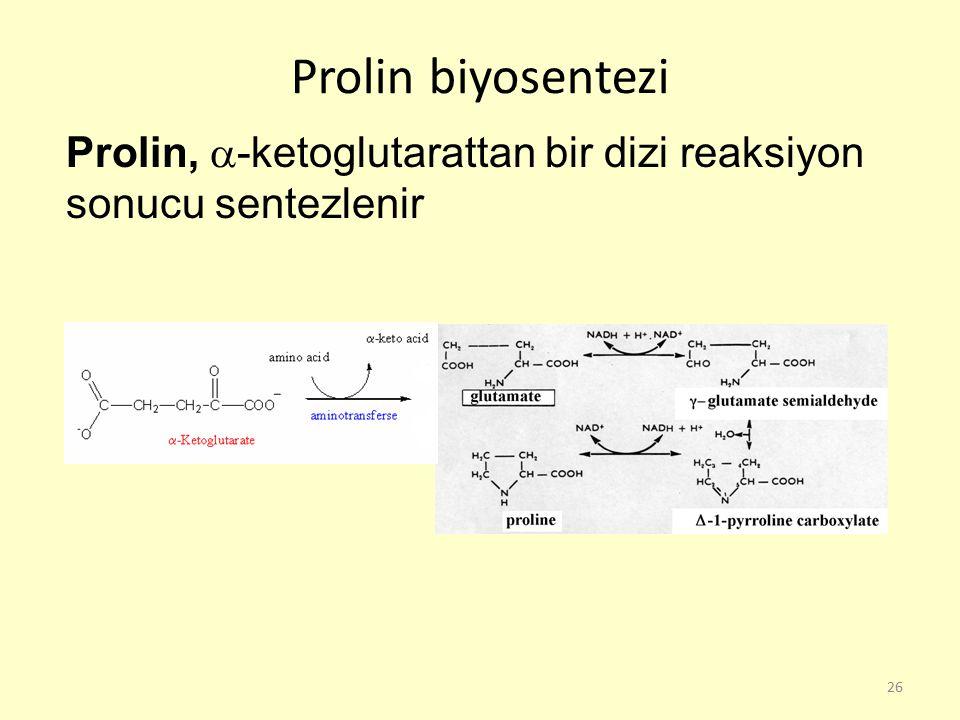 26 Prolin biyosentezi Prolin,  -ketoglutarattan bir dizi reaksiyon sonucu sentezlenir