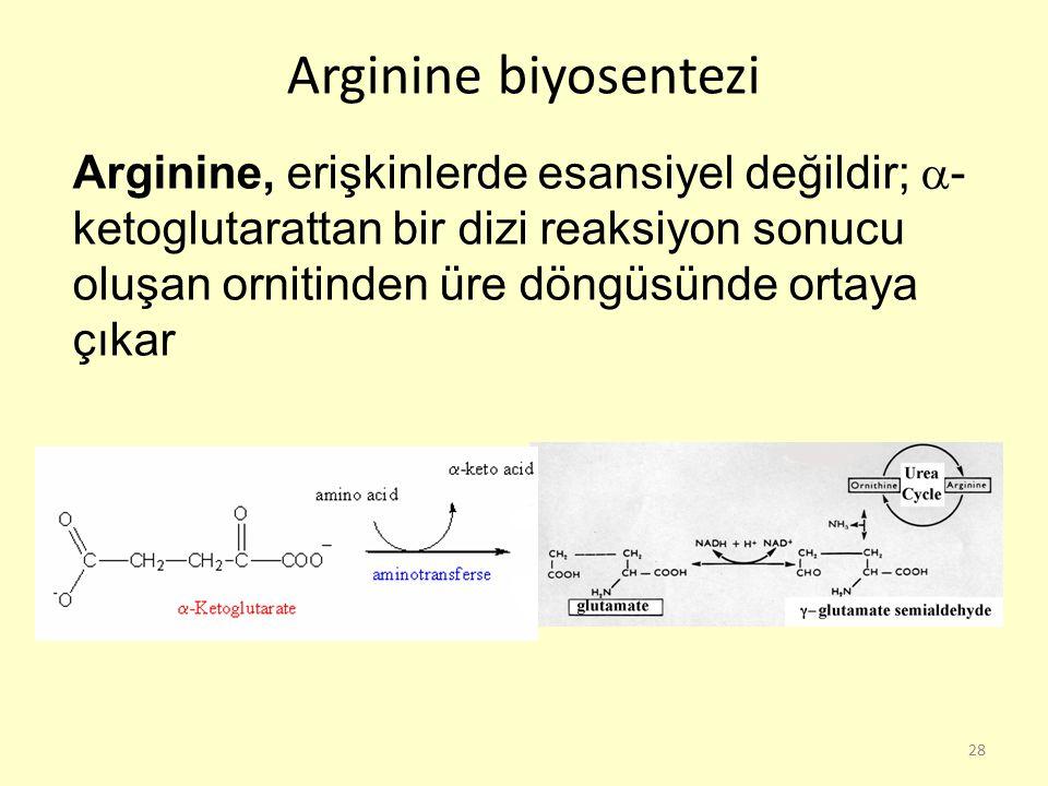 28 Arginine, erişkinlerde esansiyel değildir;  - ketoglutarattan bir dizi reaksiyon sonucu oluşan ornitinden üre döngüsünde ortaya çıkar Arginine biy