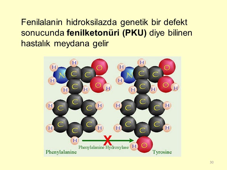 30 Fenilalanin hidroksilazda genetik bir defekt sonucunda fenilketonüri (PKU) diye bilinen hastalık meydana gelir