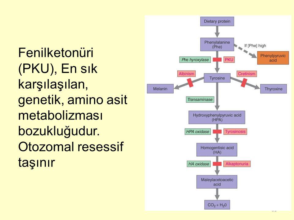 31 Fenilketonüri (PKU), En sık karşılaşılan, genetik, amino asit metabolizması bozukluğudur. Otozomal resessif taşınır
