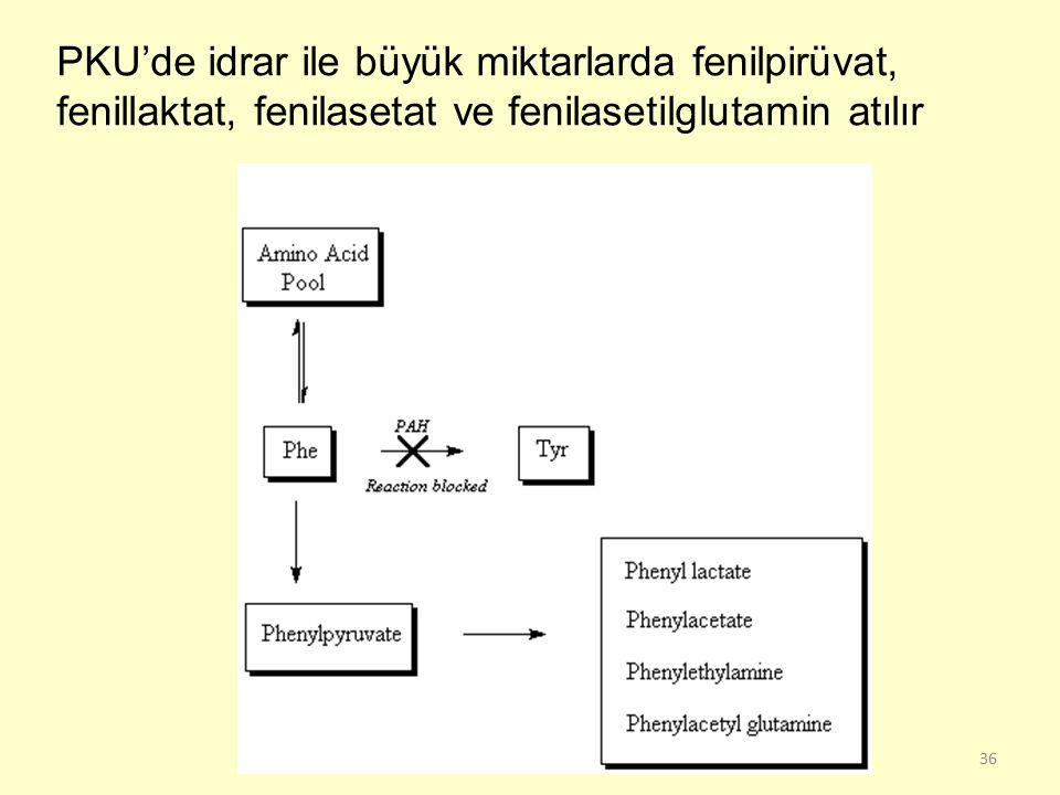 36 PKU'de idrar ile büyük miktarlarda fenilpirüvat, fenillaktat, fenilasetat ve fenilasetilglutamin atılır