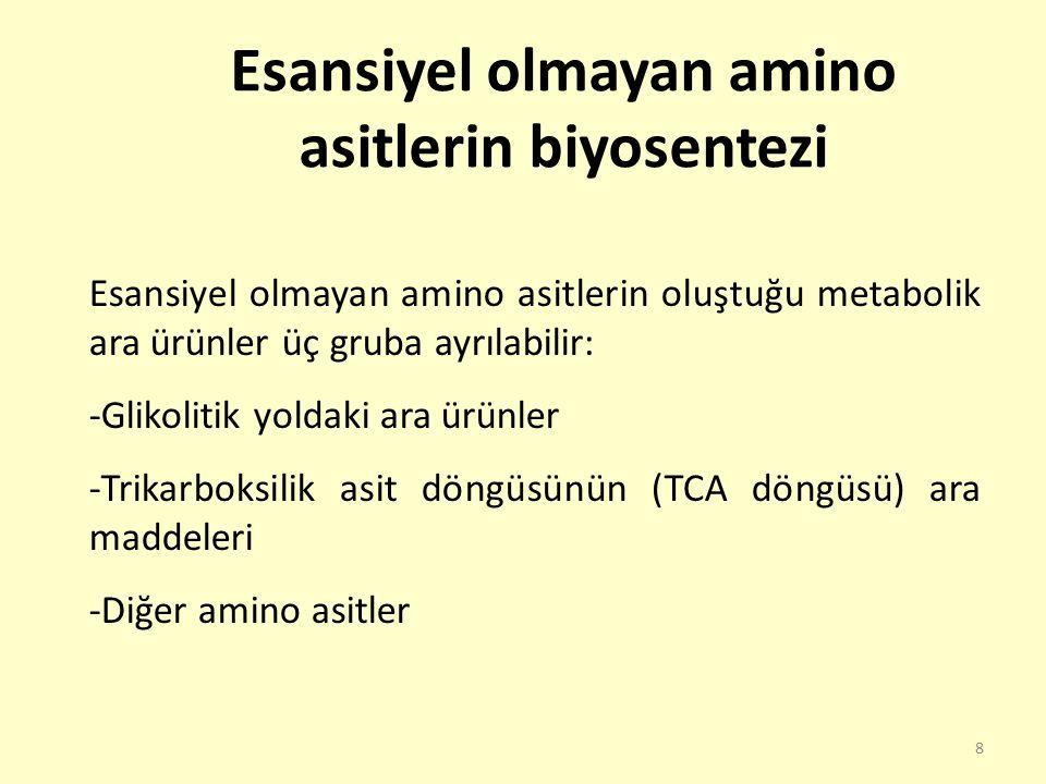 19 Trikarboksilik asit döngüsünün (TCA döngüsü) ara maddelerinden sentezlenen amino asitler, aspartat, asparajin, glutamat, glutamin ve prolindir