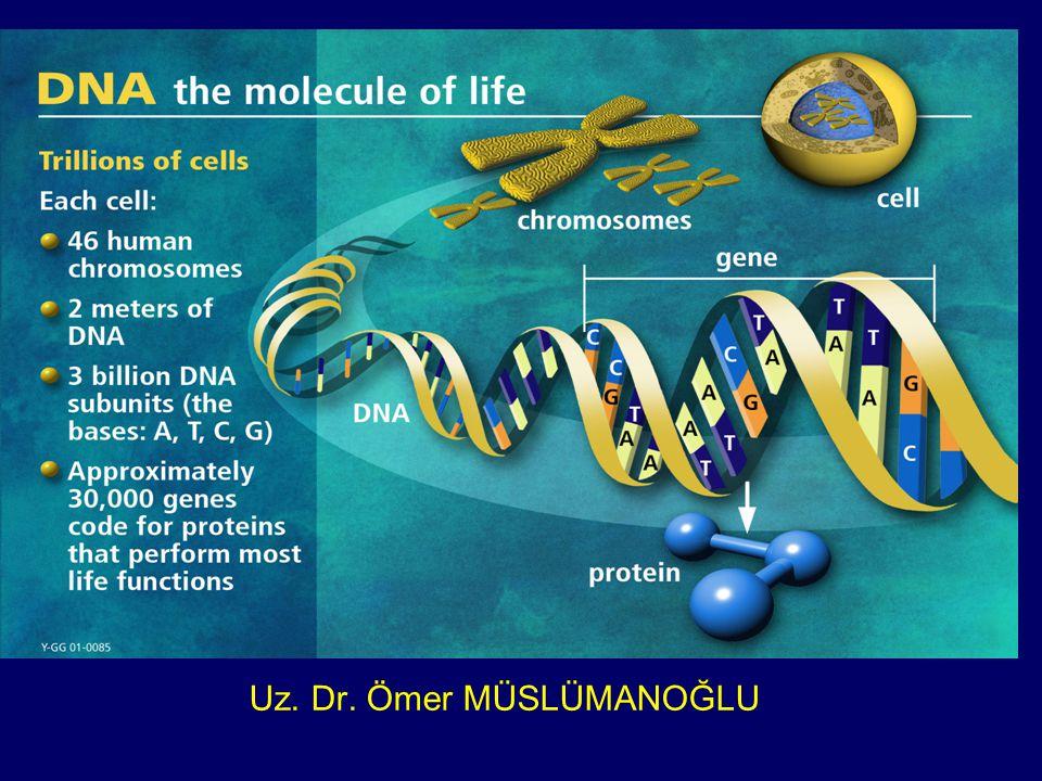 Bu güne kadar insanda 1,5 milyon kadar tek nukleotid değişikliği bölgesi saptanmıştır.