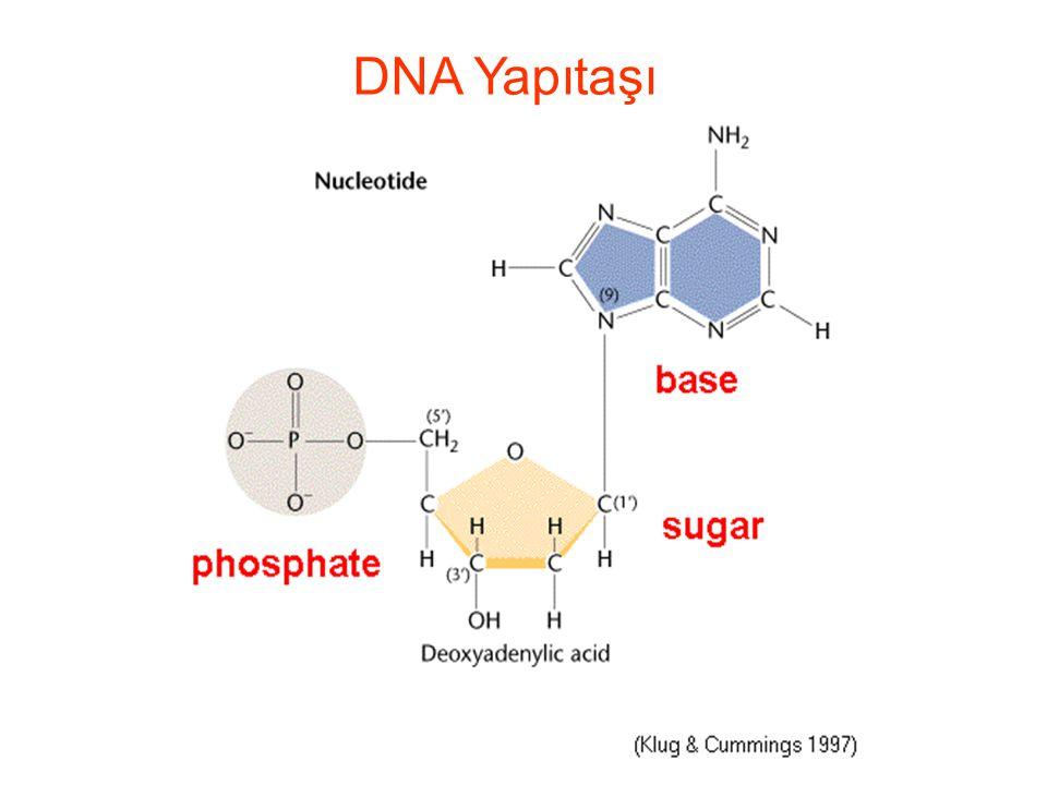 POLİMORFİZM Bir popülasyonda mevcut olan genetik çeşitliliğe polimorfizm denir DNA Polimorfizmi, DNA üzerinde hastalığa neden olmayan, suskun nükleotid değişimleri olarak tanımlanır.