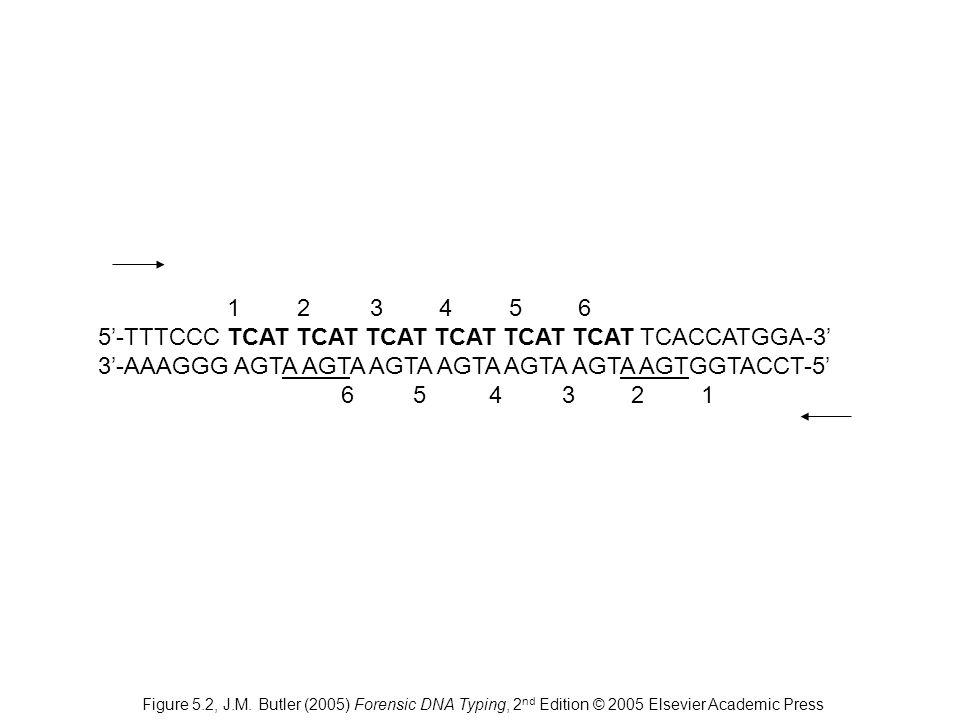 1 2 3 4 56 5'-TTTCCC TCAT TCAT TCAT TCAT TCAT TCAT TCACCATGGA-3' 3'-AAAGGG AGTA AGTA AGTA AGTA AGTA AGTA AGTGGTACCT-5' 6 5 4 3 2 1 Figure 5.2, J.M. Bu