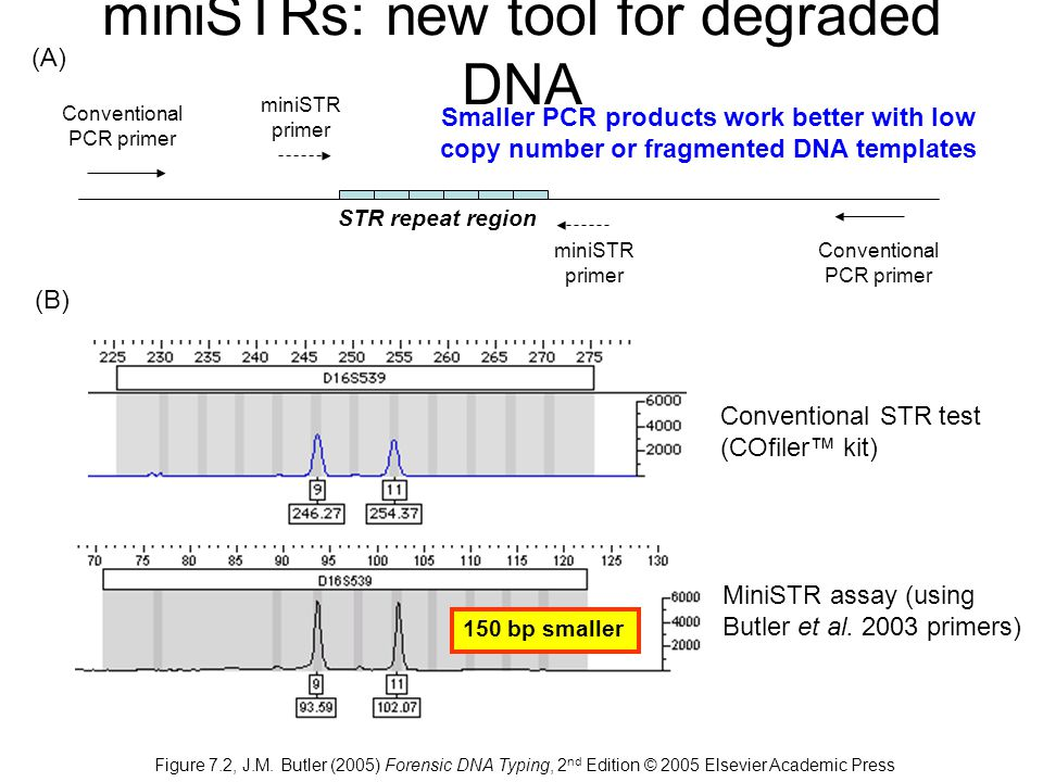 STR repeat region miniSTR primer Conventional PCR primer (A) (B) Conventional STR test (COfiler™ kit) MiniSTR assay (using Butler et al.