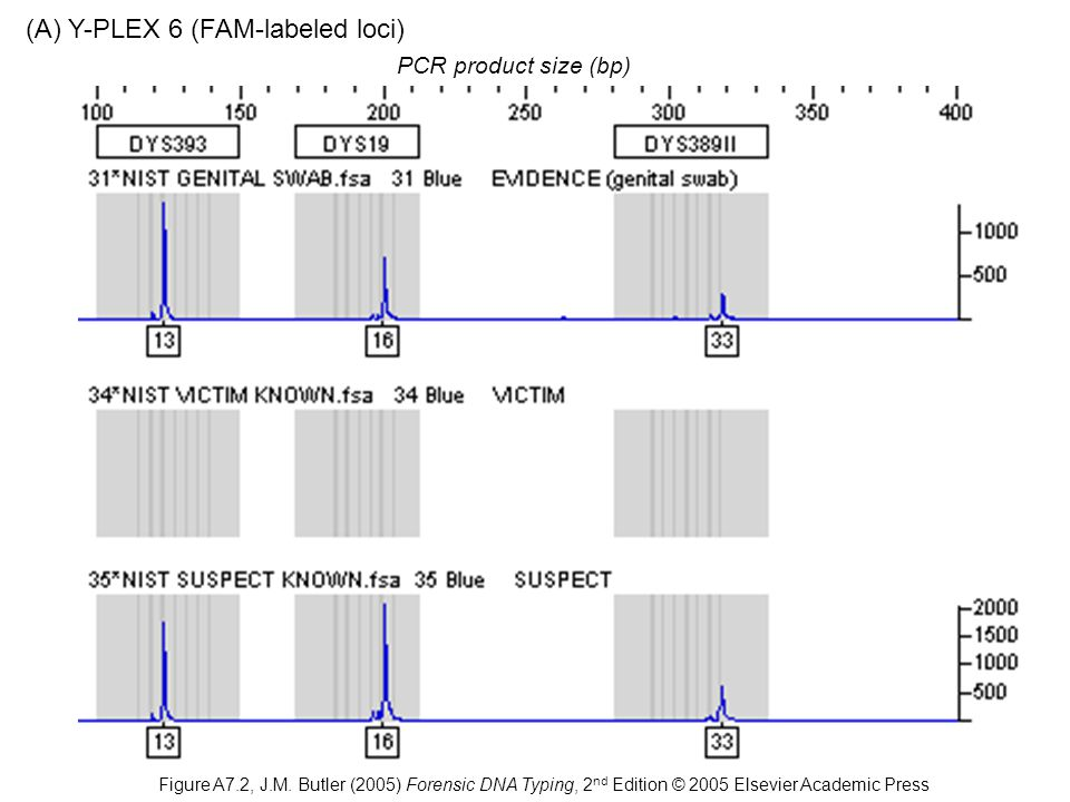 PCR product size (bp) (A) Y-PLEX 6 (FAM-labeled loci) Figure A7.2, J.M.