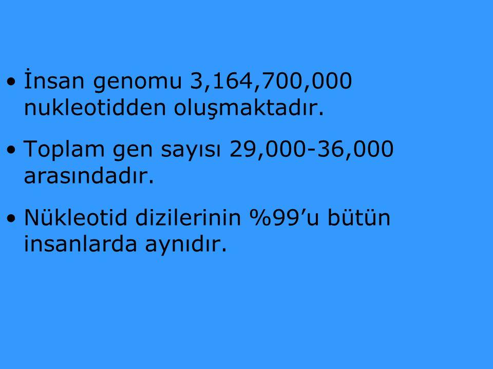 İnsan genomu 3,164,700,000 nukleotidden oluşmaktadır. Toplam gen sayısı 29,000-36,000 arasındadır. Nükleotid dizilerinin %99'u bütün insanlarda aynıdı