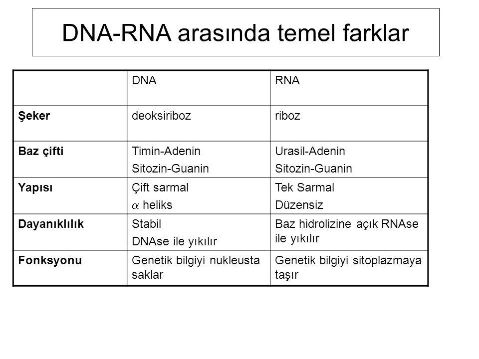 DNA-RNA arasında temel farklar DNARNA Şekerdeoksiribozriboz Baz çiftiTimin-Adenin Sitozin-Guanin Urasil-Adenin Sitozin-Guanin YapısıÇift sarmal  heli