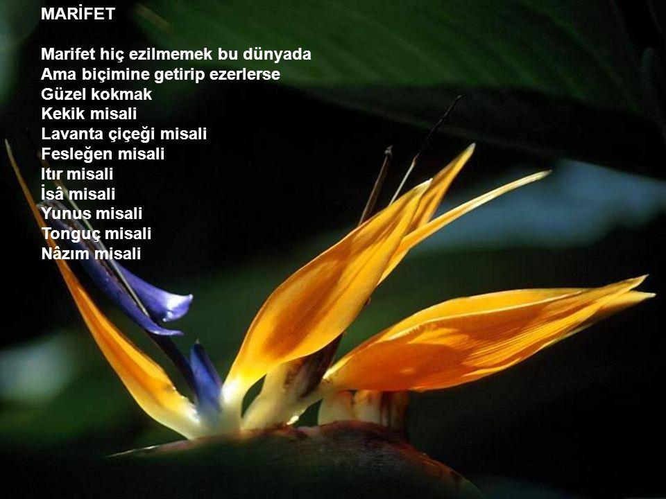 MARİFET Marifet hiç ezilmemek bu dünyada Ama biçimine getirip ezerlerse Güzel kokmak Kekik misali Lavanta çiçeği misali Fesleğen misali Itır misali İsâ misali Yunus misali Tonguç misali Nâzım misali