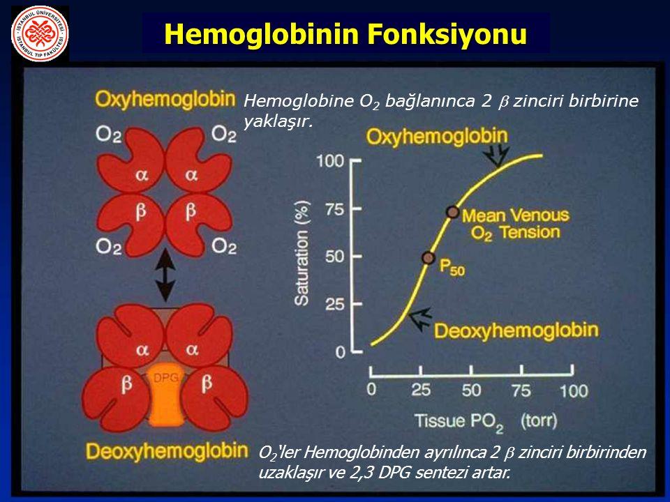 O 2 'ler Hemoglobinden ayrılınca 2  zinciri birbirinden uzaklaşır ve 2,3 DPG sentezi artar. Hemoglobinin Fonksiyonu Hemoglobine O 2 bağlanınca 2  zi