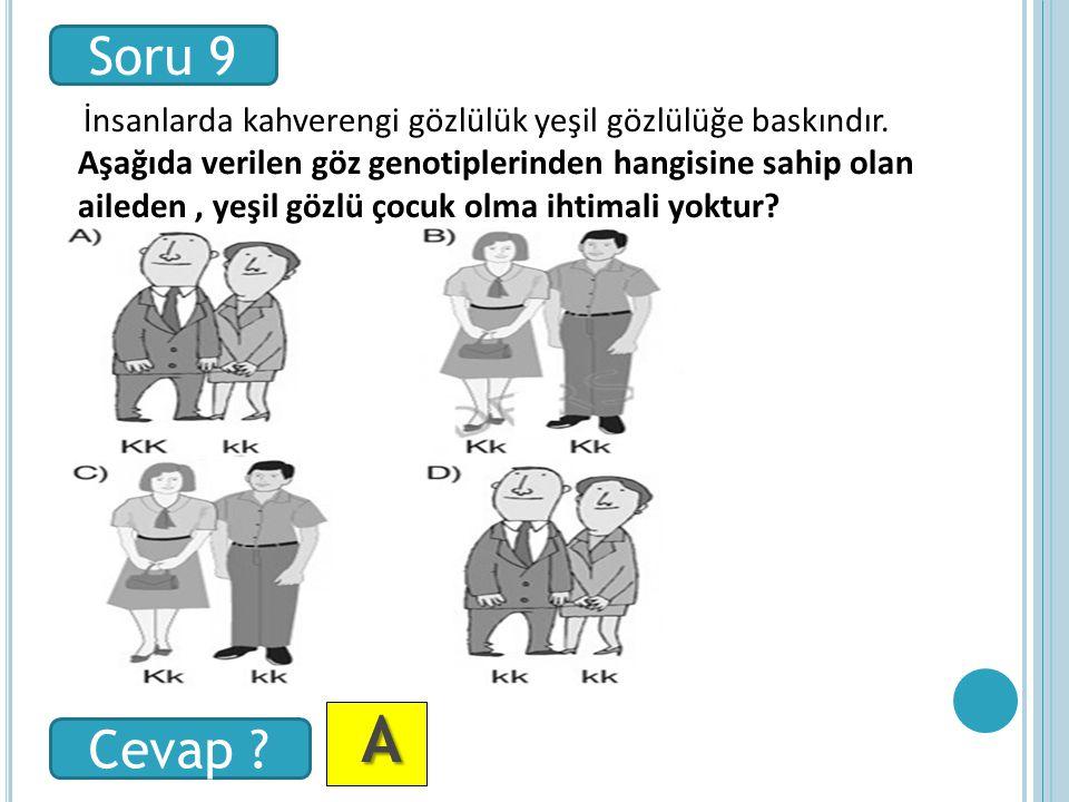 A AA A Soru 9 Cevap . İnsanlarda kahverengi gözlülük yeşil gözlülüğe baskındır.