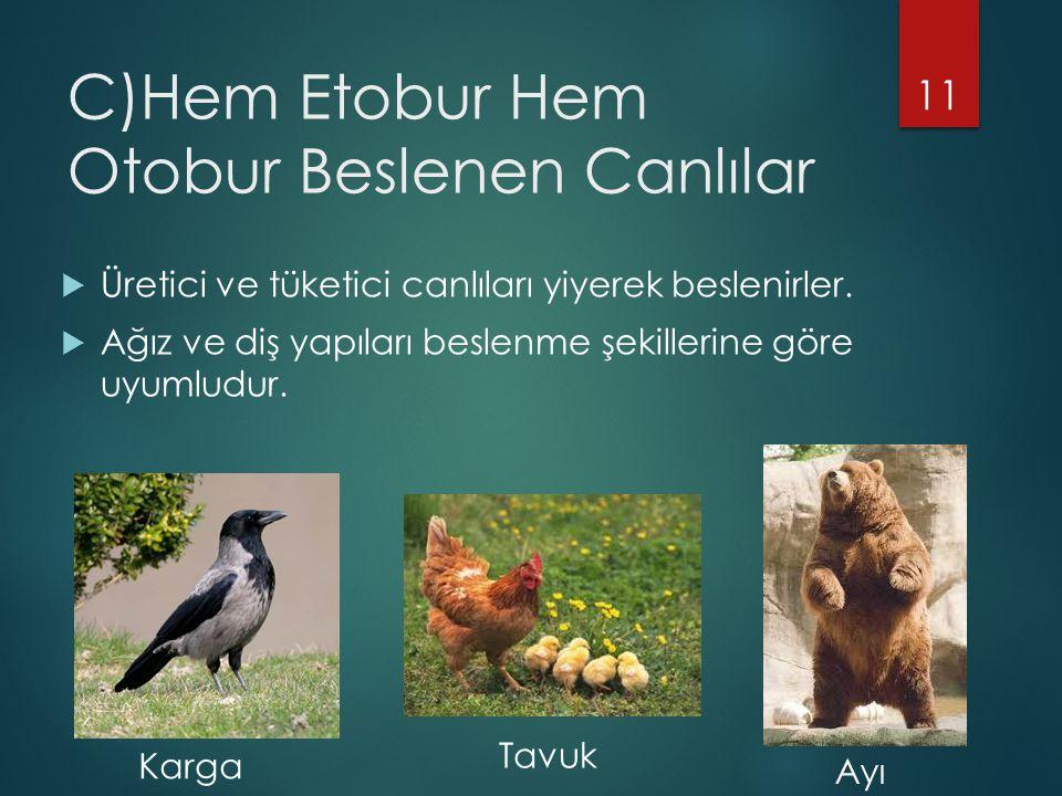 C)Hem Etobur Hem Otobur Beslenen Canlılar  Üretici ve tüketici canlıları yiyerek beslenirler.  Ağız ve diş yapıları beslenme şekillerine göre uyumlu