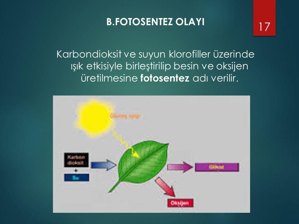 B.FOTOSENTEZ OLAYI Karbondioksit ve suyun klorofiller üzerinde ışık etkisiyle birleştirilip besin ve oksijen üretilmesine fotosentez adı verilir. 17