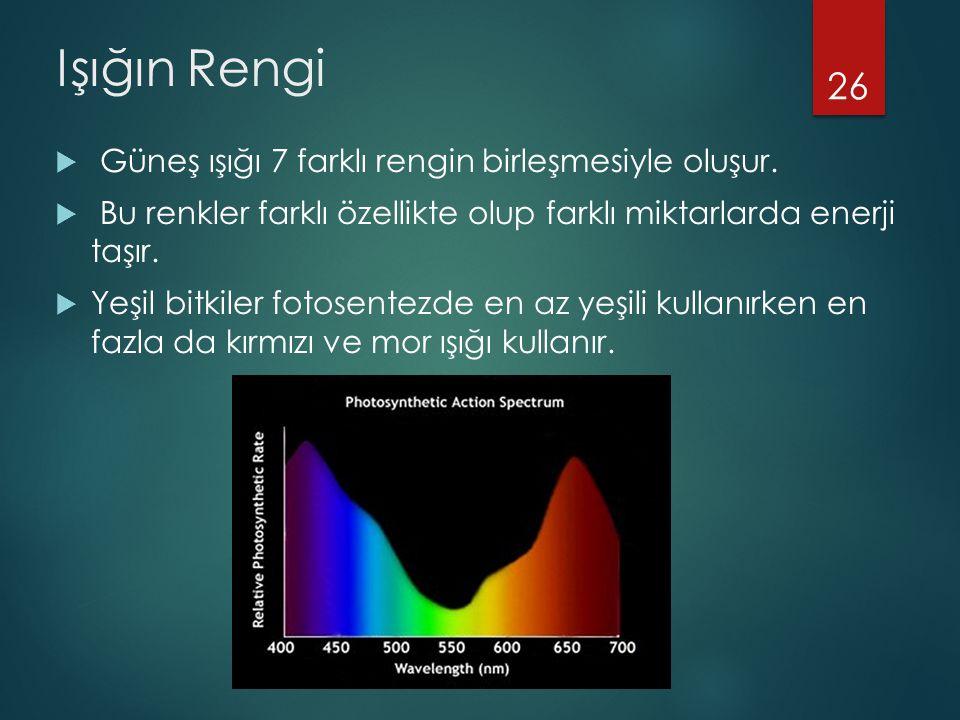 Işığın Rengi  Güneş ışığı 7 farklı rengin birleşmesiyle oluşur.  Bu renkler farklı özellikte olup farklı miktarlarda enerji taşır.  Yeşil bitkiler