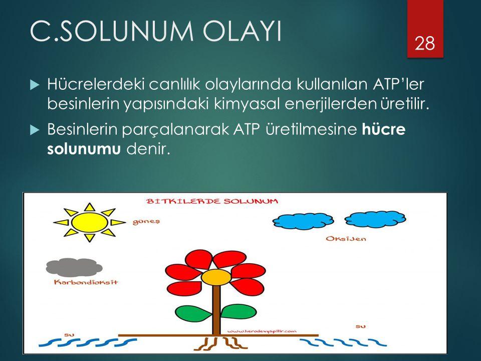 C.SOLUNUM OLAYI  Hücrelerdeki canlılık olaylarında kullanılan ATP'ler besinlerin yapısındaki kimyasal enerjilerden üretilir.  Besinlerin parçalanara