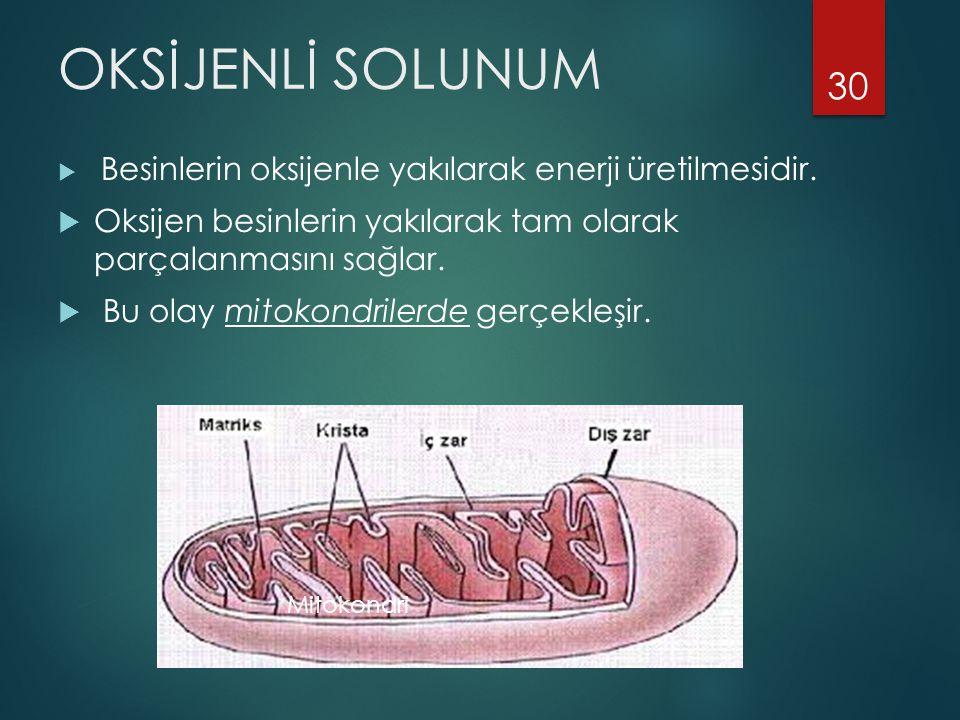 OKSİJENLİ SOLUNUM  Besinlerin oksijenle yakılarak enerji üretilmesidir.  Oksijen besinlerin yakılarak tam olarak parçalanmasını sağlar.  Bu olay mi