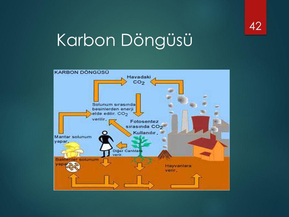 42 Karbon Döngüsü