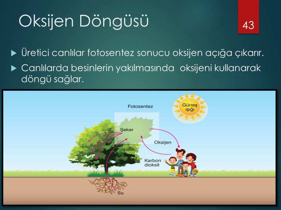 Oksijen Döngüsü  Üretici canlılar fotosentez sonucu oksijen açığa çıkarır.  Canlılarda besinlerin yakılmasında oksijeni kullanarak döngü sağlar. 43