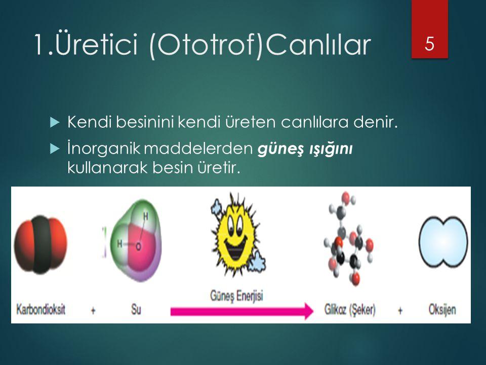 1.Üretici (Ototrof)Canlılar  Kendi besinini kendi üreten canlılara denir.  İnorganik maddelerden güneş ışığını kullanarak besin üretir. 5