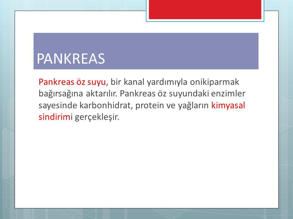Pankreas öz suyu, bir kanal yardımıyla onikiparmak bağırsağına aktarılır. Pankreas öz suyundaki enzimler sayesinde karbonhidrat, protein ve yağların k