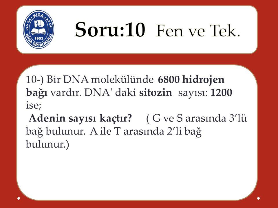10-) Bir DNA molekülünde 6800 hidrojen bağı vardır. DNA' daki sitozin sayısı: 1200 ise; Adenin sayısı kaçtır? ( G ve S arasında 3'lü bağ bulunur. A il