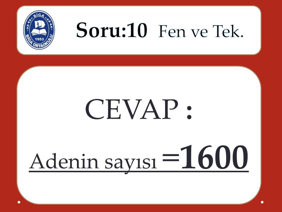 CEVAP : Adenin sayısı =1600
